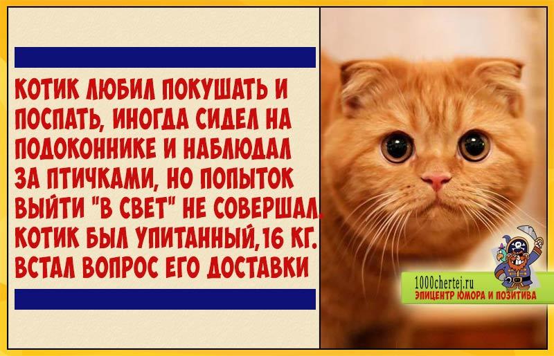 История про страдания кота, который сидел на диете, чтобы переехать жить на Канары