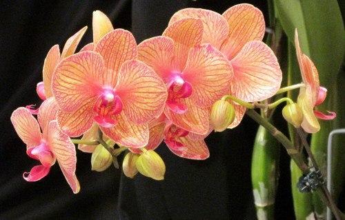 Создание условий для выращивания орхидей