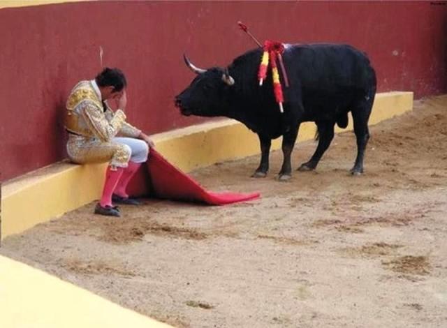 """""""Я не хочу с тобою драться, не хочу..."""" — бык устыдил матадора, категорически отказавшись нападать!"""