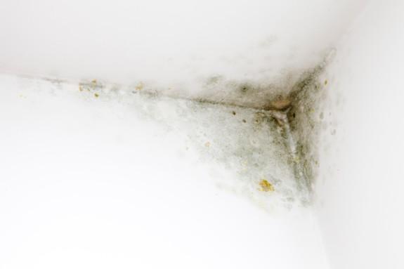 Если же плесень появляется в углах комнат, следует также поговорить с соседями – вполне возможно, что она начинает мигрировать от них и источник необходимо искать вовсе не в вашем доме.
