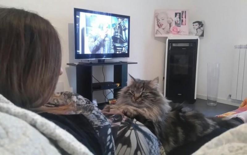 Кот стал настоящей нянькой для родившейся Софии