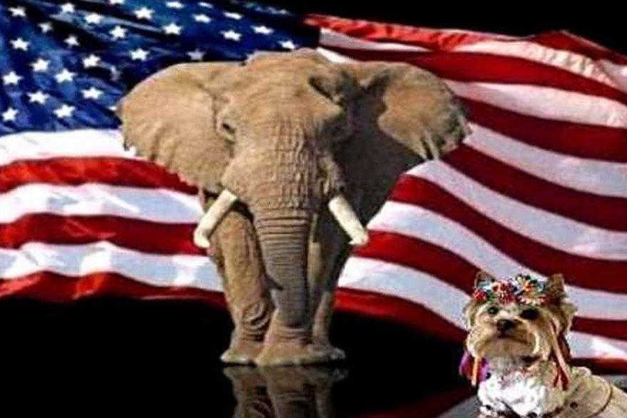 """Америка похвалила Украину: """"Хорошая собачка, хорошая!"""""""