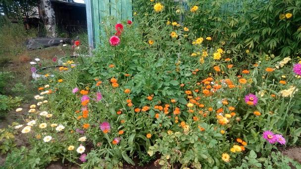 Мои цветы и природа. Продолжение...