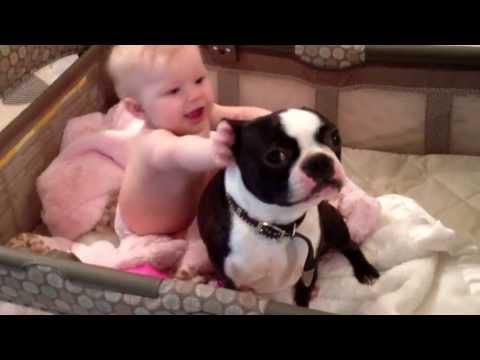 Мама пытается отучить пса от плохой привычки, но как с таким спорить!