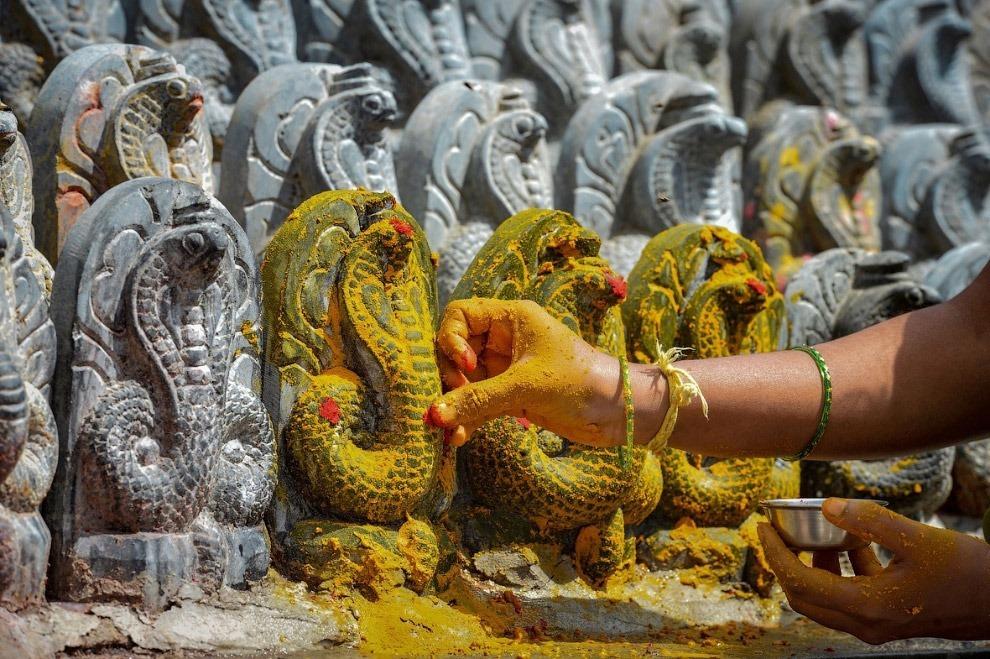Змеиный фестиваль Nag Panchami —  традиционное поклонение змеям в Индии