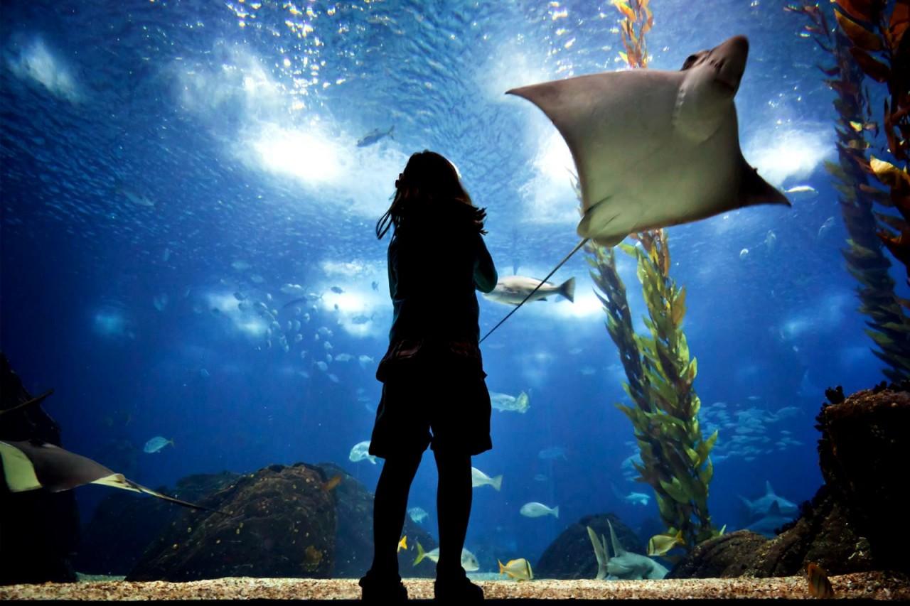 Океанариум в Лиссабоне Португалия. Океаны в миниатюре. Самые известные и крутые океанариумы мира. Фото с сайта NewPix.ru