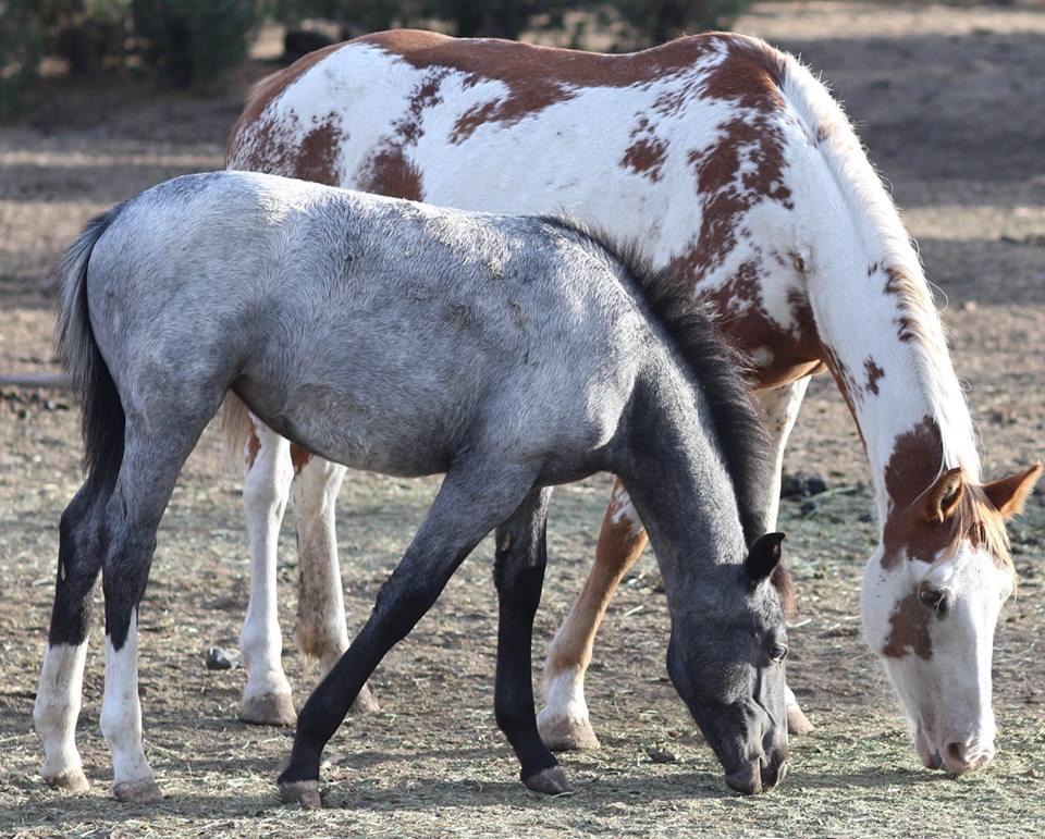 Их разлучили на полгода… Встреча кудрявого коня с его любимой закончилась сюрпризом