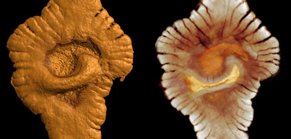Расширенный эволюционный синтез и дарвинизм как частность