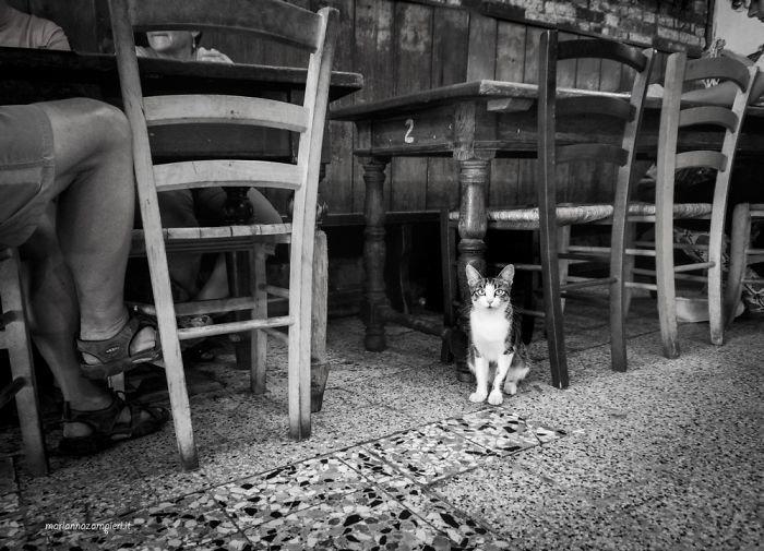 16. Григетта в ресторане домашние животные, коты, кошка, кошка в магазине, кошки, фотопроект, черно-белая фотография, черно-белое фото