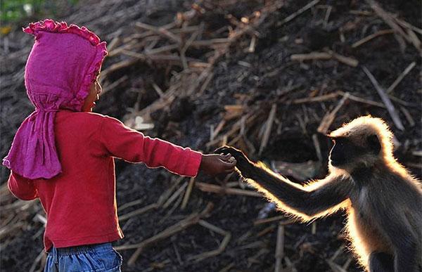 Двухлетний современный Маугли - мальчик общается со стаей диких обезьян
