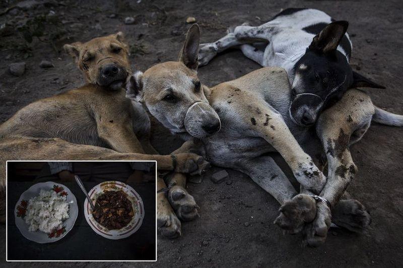 Жуткие кадры с индонезийской скотобойни, где убивают собак
