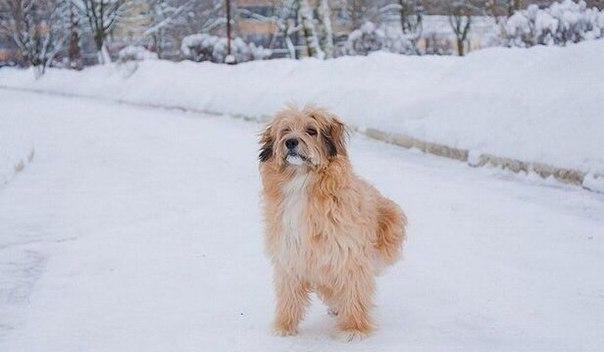 Собака с переломом позвоночника.