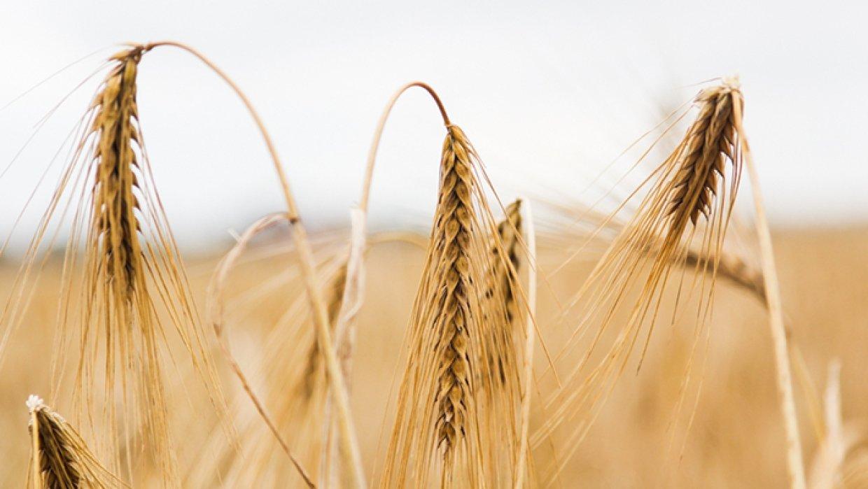 Крымский агрохолдинг назвал …