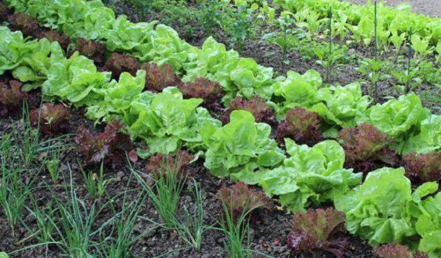 Посадите свои овощи по новому. И результат Вас порадует…