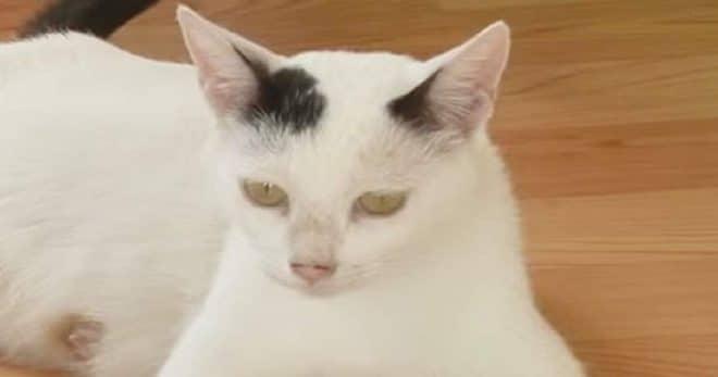 Кошка, которую увезли в прию…