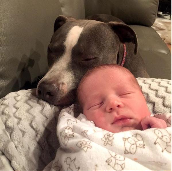 4 собаки и кошка воспитывают детей.