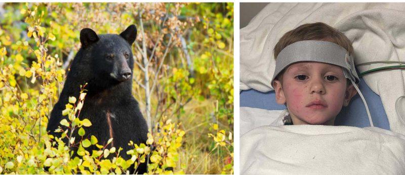 Медведь спас заблудившегося 3-летнего ребёнка