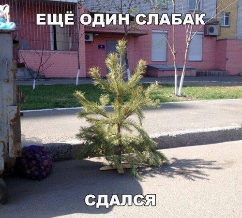 Смешные пятничные анекдоты (14 шт)