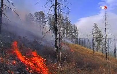 Площадь лесных пожаров в Приморье увеличилась на 700 гектаров