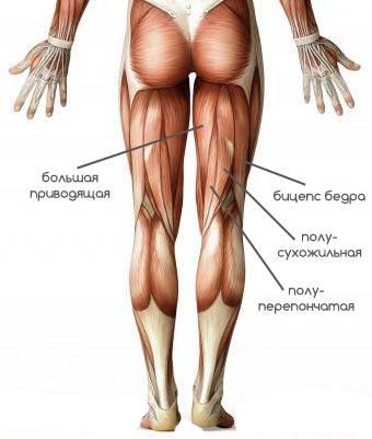 Точеные ноги: Лучшие упражнения на заднюю поверхность бедра