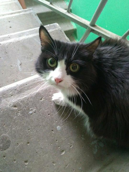 Умерла хорошая женщина. Наследники выбросили ее кошку в подъезд. Ищем дом.