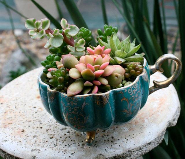 Как вырастить сад в чашке