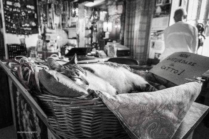 Фотопроект C-AT Work: кошки на работе