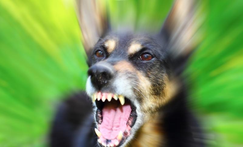 безнадзорная собака
