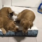The way these dogs arrange t…