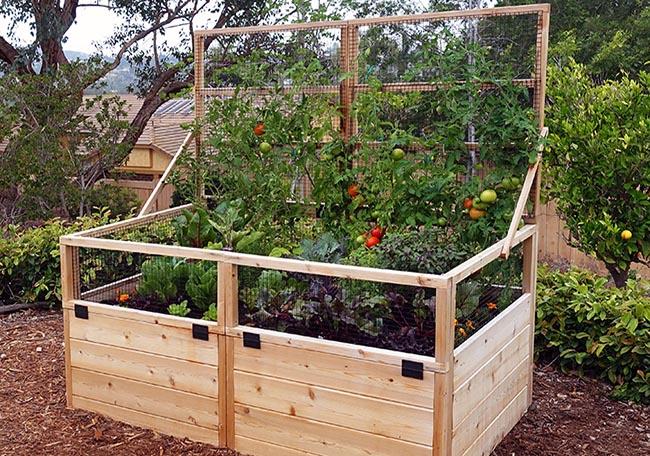Картинки по запросу raised garden bed with trellis