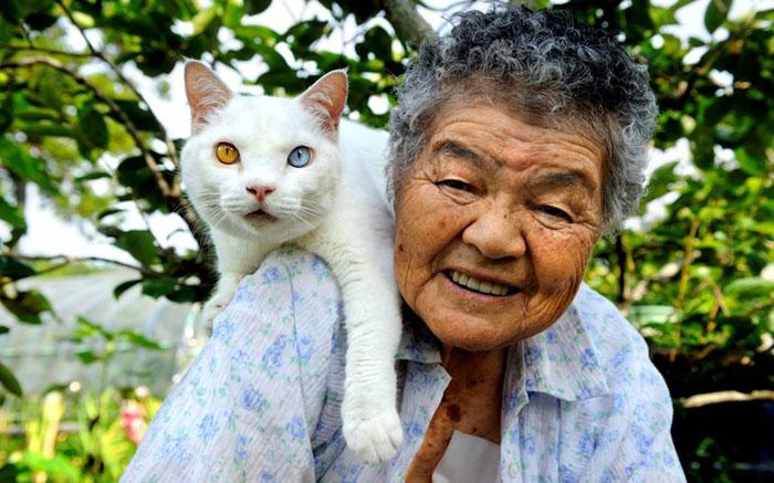 Трогательная дружба между бабушкой и кошкой с разноцветными глазами