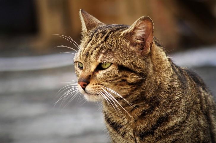 Испытание на выживание этот кот выдержал с честью