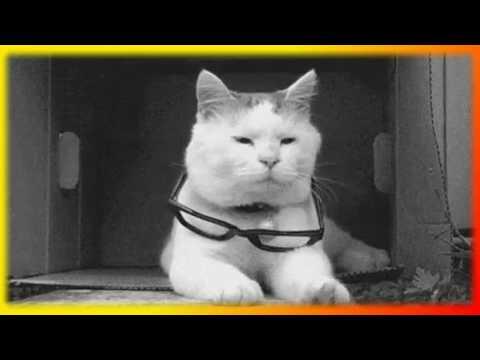 Видео смешных животных Смешные и прикольные животные Создай себе хорошее настроение