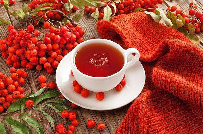 Чай как лекарство: как сделать традиционный осенний напиток с ягодами ещё полезнее в период осенних простуд
