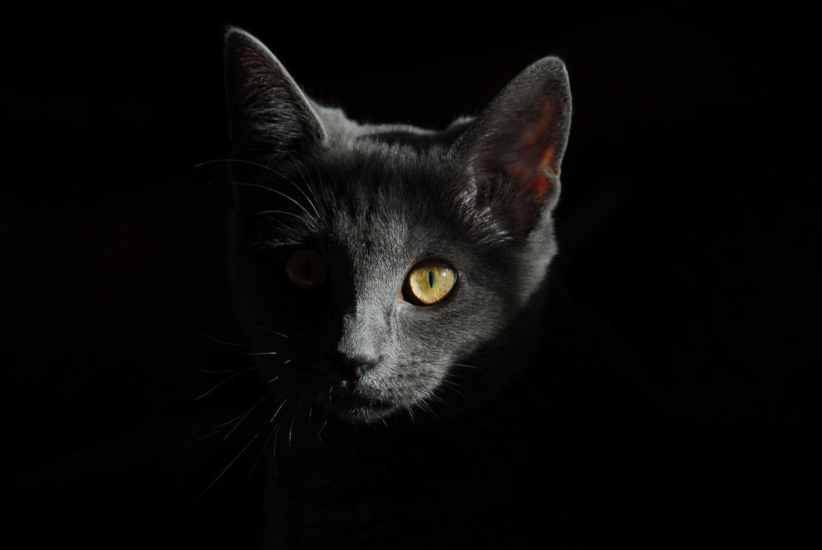 По следам черной кошки