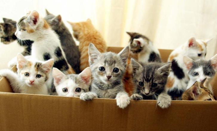 История про кота Мазая и силу отцовского инстинкта