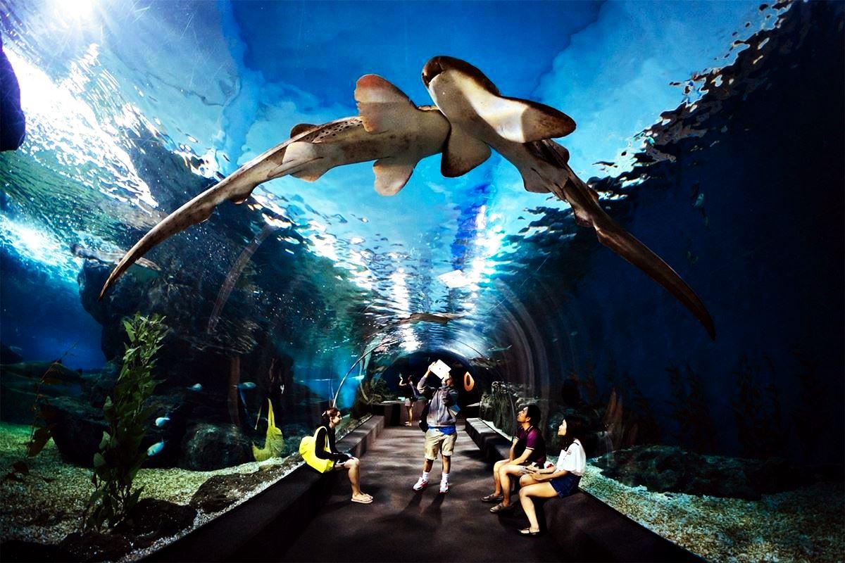 Мир Сиамского океана Таиланд. Океаны в миниатюре. Самые известные и крутые океанариумы мира. Фото с сайта NewPix.ru