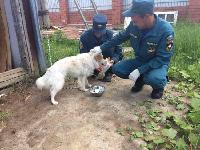 МЧС-овцы приехали в пустой дом — покормить собаку, которую когда-то спасли… И вот к чему привела их инициатива