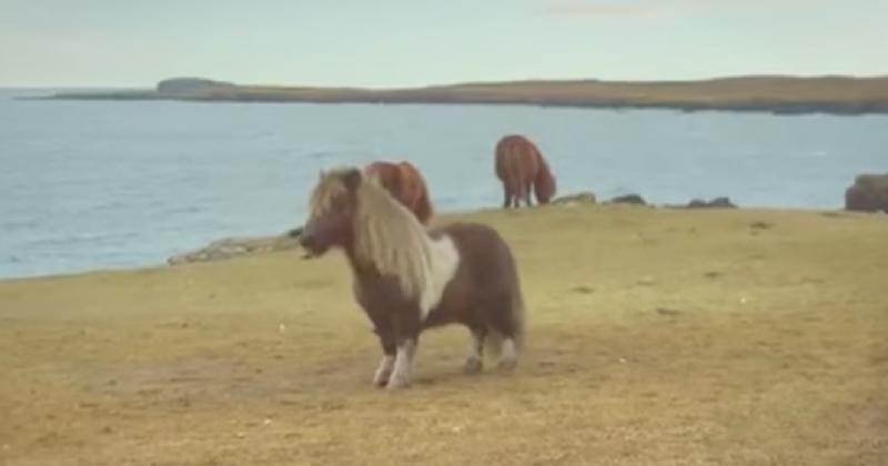Оказывается, лошади часто делают это, пока люди не видят! Хорошо, что камера была включена…