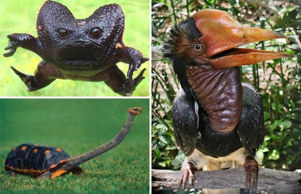 Невероятно странные животные…
