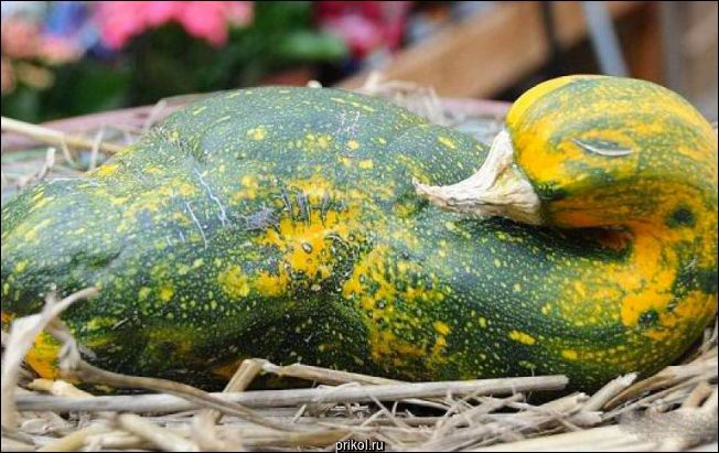 Овощи, которые похожи на что-то другое