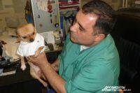 Долгое время у Карена Даллакяна жил пес породы чихуахуа.