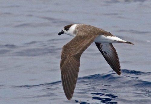ТОП-10: Факты о Бермудских островах, которые являются даже более странными, чем сам Бермудский треугольник