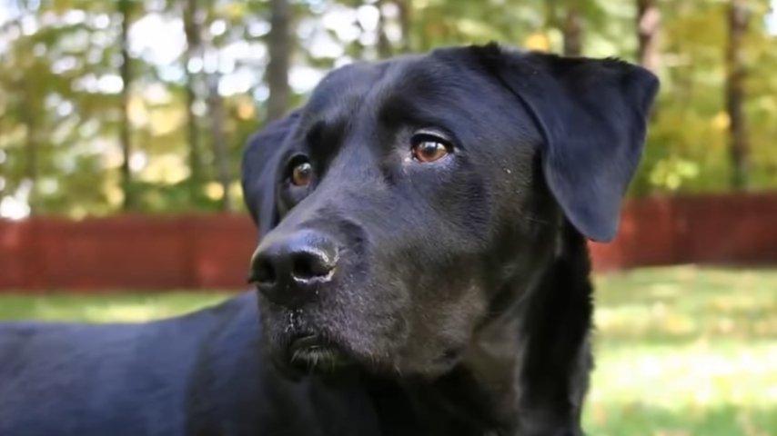 Он хотел вернуть пса в приют, пока не узнал, кто был его прежним хозяином! Удивительная история!