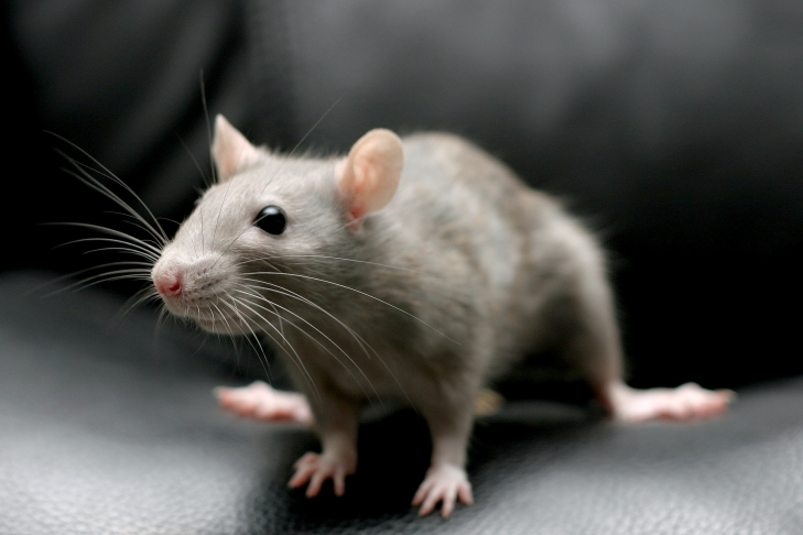 Аргентинские полицейские обвинили мышей в пропаже полтонны марихуаны