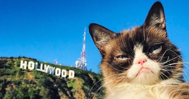 Их любят все: топ-10 инстаграм-аккаунтов самых популярных котов и кошек