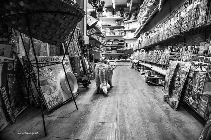 10. Нандо в газетном киоске домашние животные, коты, кошка, кошка в магазине, кошки, фотопроект, черно-белая фотография, черно-белое фото