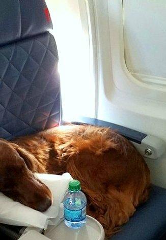 Собака-поводырь, фото со фотостока