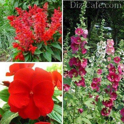 Выбираем красивые однолетние цветы для сада