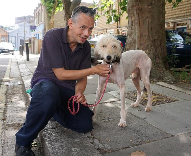 Бездомный тонколапый пёс лысел не по дням, а по часам... Спасение очаровательного пса